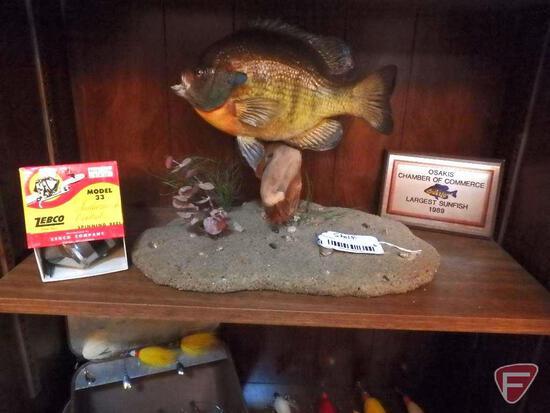 "9"" plus mounted Bluegill Sunfish with plaque ""Osakis Chamber of Commerce Largest Sunfish 1989"""