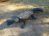 5' Aligator