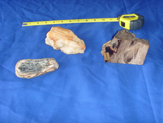 3  pieces of rocks and petrified wood