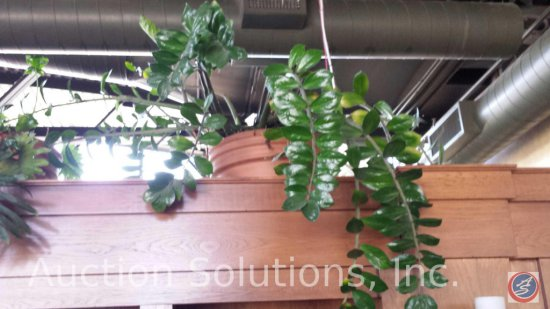 Large Live Potted Indoor Plant (Choice of 18 Lots 1-17, +26)