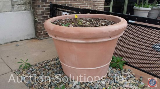Large Live Potted Outdoor Plant (Choice of 8 Lots 19-25)