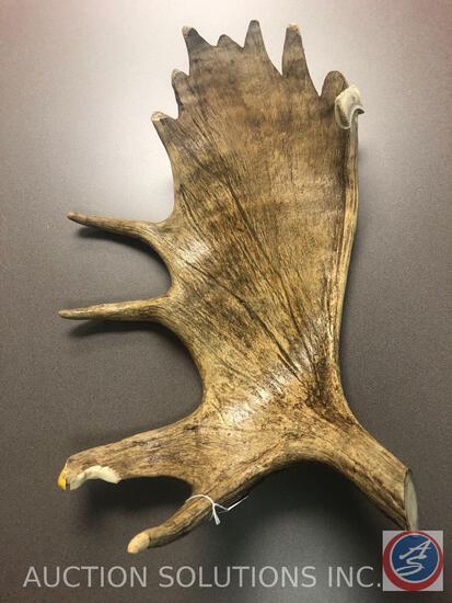 Moose Antler Sculpture of Buffalo