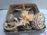 Box of seashell collection and trinket box