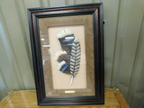 FRAMED FEATHERS NWTF GOULDS