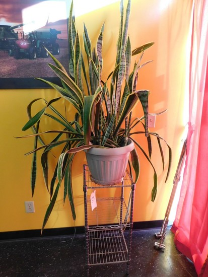 STAINLESS UTILITY TABLE W/ POTTED SNAKE PLANT