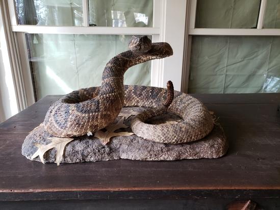Rattlesnake Mount