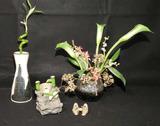 Assorted Decorative Items: Artificial