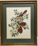 Framed & Matted Vintage Signed Bird Print--21 1/2