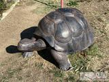 Tortoise yard art