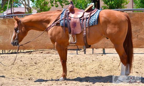 """Handy"" 1250 lb Grade Quarter Horse Sorrel Gelding- See Video!"