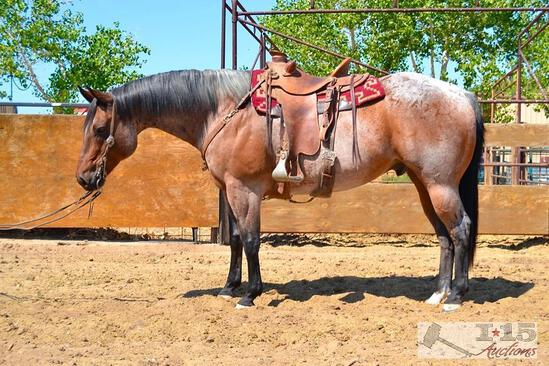 """Big Jake"" 1350 lb Bay Roan Grade Gelding- See Video!"
