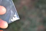 0.81 Carats of Australian Opals