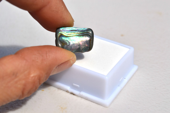 8.95 Carat Very Fine Abalone Shell Cabochon