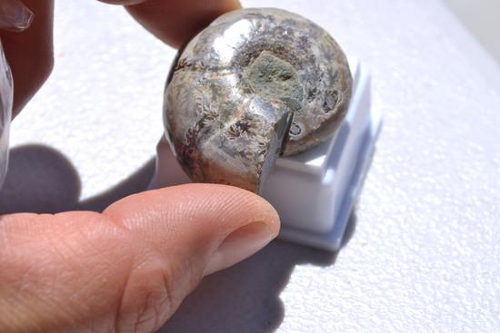 101.45 Carat Fine Ammolite