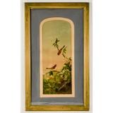 Framed Antique Print of Birds