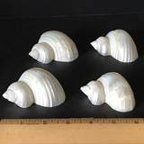 Set of 4 Shell Napkin Holders