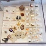 Plexiglass Display Case Filled with Interesting Items from An Archaeologist Collection