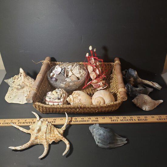 Basket Lot of Seashells