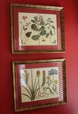 2 Plant Botanical Prints