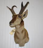 Antelope Mount
