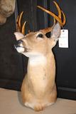 Deer Mount 8 Pt. Buck