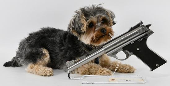 Gun Collectors Dream Auction #31 NO RESERVES!