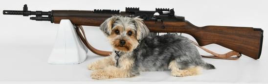 Gun Collectors Dream Auction #37 Day 2 NO RESERVES