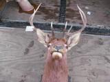 Elk 5x5 mount