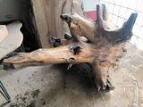 Stump Species Not Known  66 Long x 40 Wide  x  33 Tall