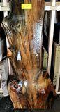 Slash Pine Tree Slab With Epoxy Finish
