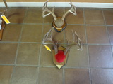 2 Wt Mounted Horns