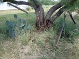 Antique Yard Art 2 Wheels, Branding Iron, Pull Plows and Single Trees
