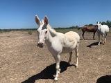 Roger the Donkey