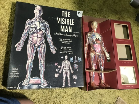 The Visible Man Science Toy in Box
