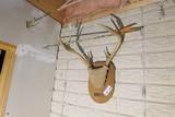 Deer antler and arrow