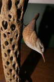 Carved wood and painted bird by Emeric Zuccaro