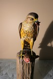 Carved wood and painted falcon eating sparrow by Emeric Zuccaro