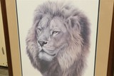 Vintage Signed print of Lion - Guy Coheleach