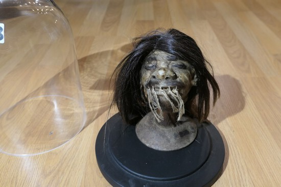 Unusual old Shrunken Head under Glass