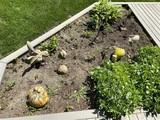 Grouping of smaller yard or garden art pieces