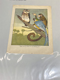 Huge lot of high quality color plates from books