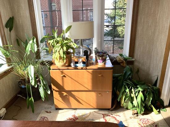 File Cabinet (NO KEY), Plants, Lamp, & Decorative Items