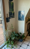 7 Pieces of Artwork and Plants