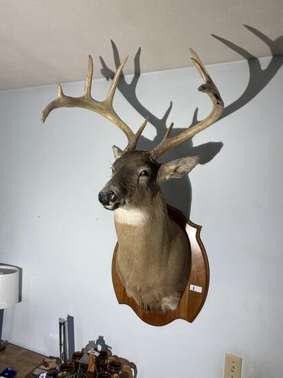 Vintage Taxidermy Deer Mount with Big Rack
