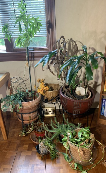 Great Group of Planters, Plant Stands & More