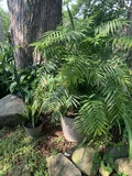 Assortment of 3 Potted Plants