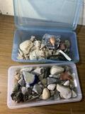Fossiles, Rocks & Shell