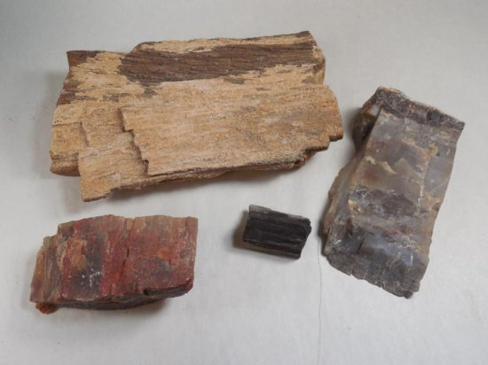 Group lot of four pieces of Petrified Wood
