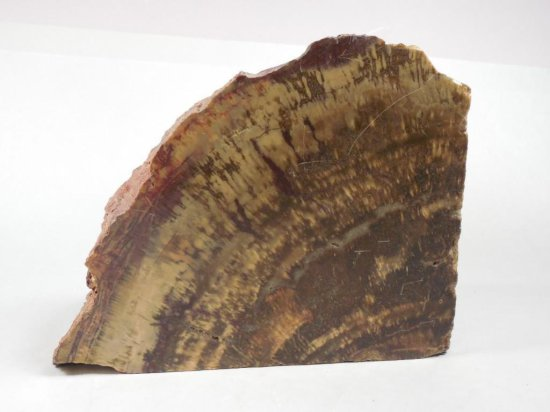 Large Petrified Wood Bookend or Desk Item