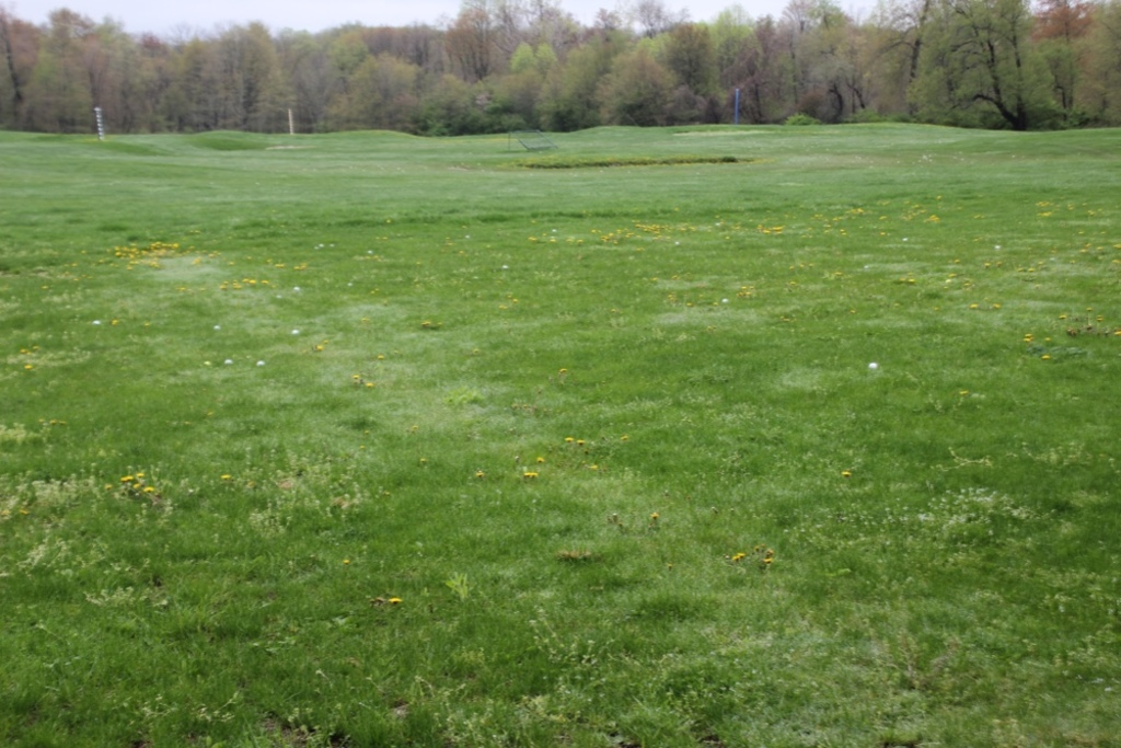 Assorted Golf Balls Left out in Driving Range & (2) Nets From Driving Range